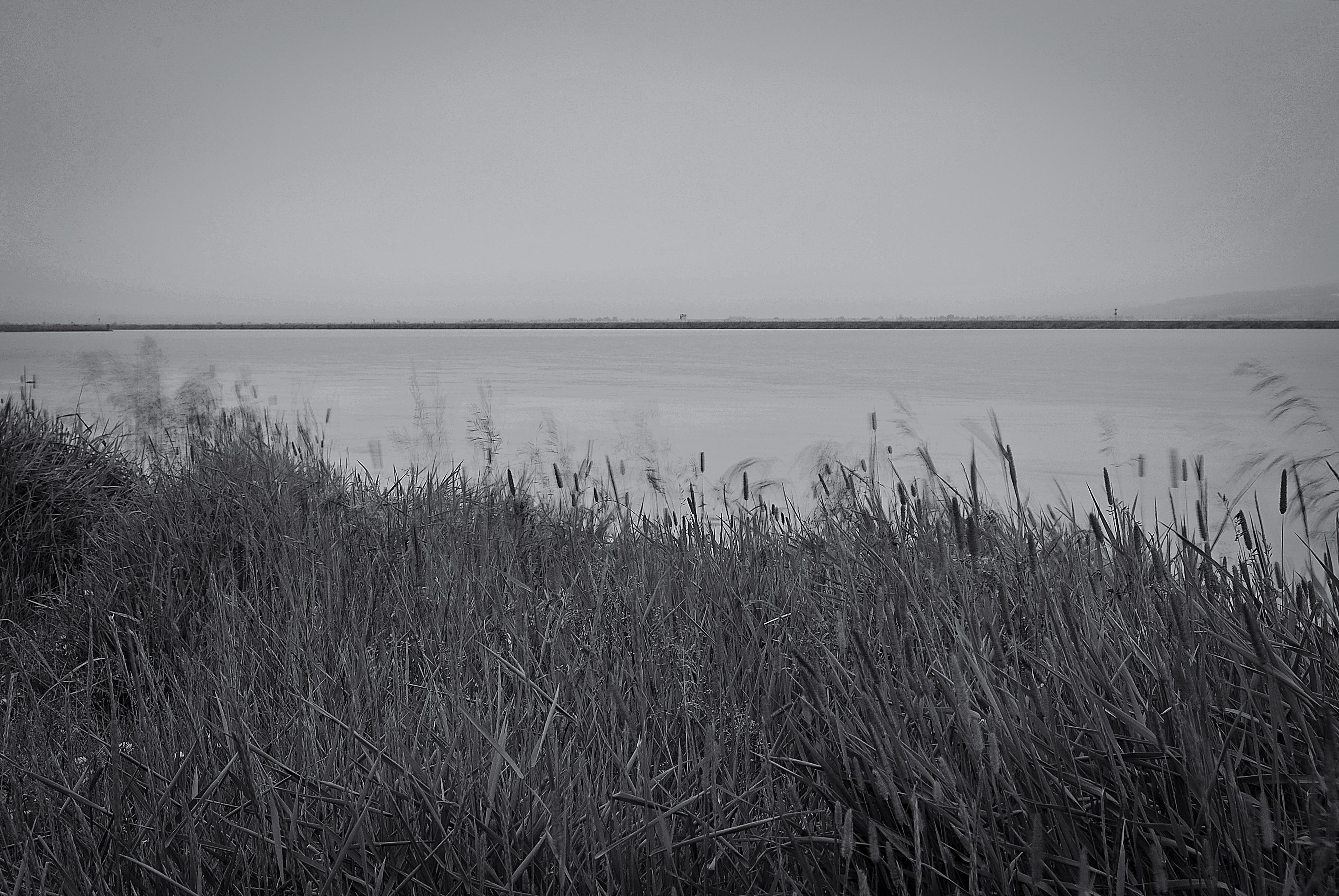 Svavar Alfreð Jónsson - Hausmynd